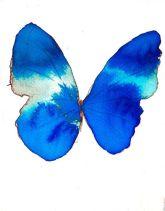 azure_vlinder